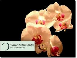 http://www.wayaheadrehab.com website