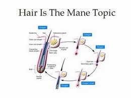 http://hairisthemanetopic.com/ website